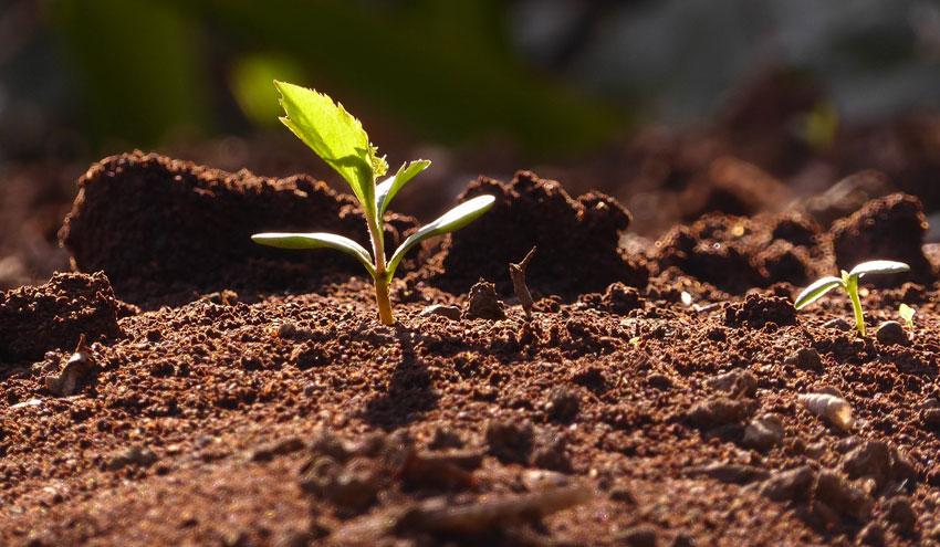 Biochar magnético para la descontaminación de suelos