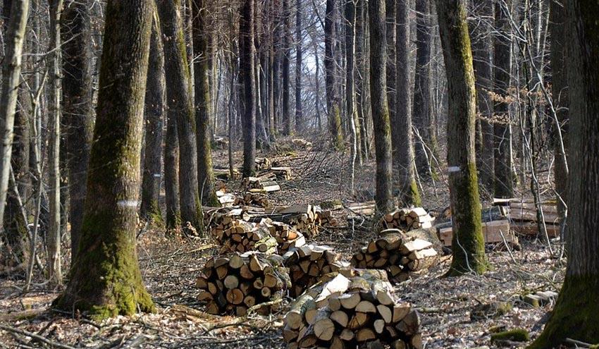 AVEBIOM aplaude el acuerdo de la Junta de Castilla y León para calentar edificios públicos con biomasa