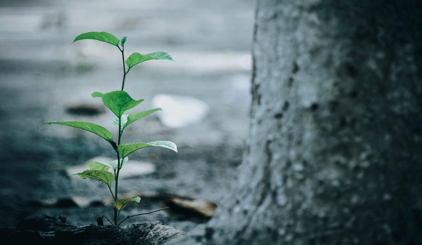 Así se repartirán los primeros Fondos de Recuperación para biodiversidad, agua y restauración ambiental