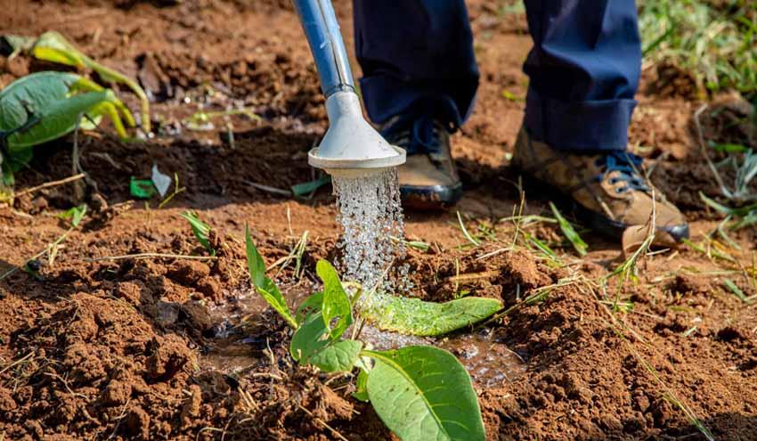 """""""Es necesario conocer los posibles riesgos microbiológicos en la agricultura ecológica"""""""