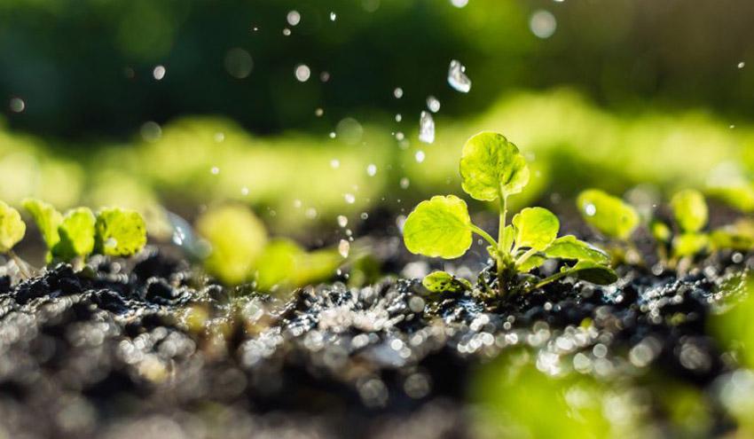 Fenacore aboga por la cesión temporal de agua como una de las principales medidas para paliar la sequía