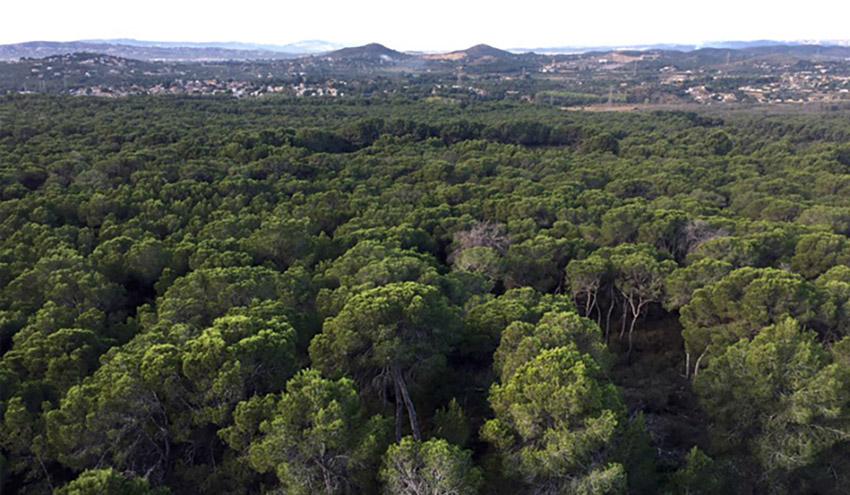 El IIAMA participa en un proyecto para reducir el riesgo de incendio en el Parc Natural del Túria