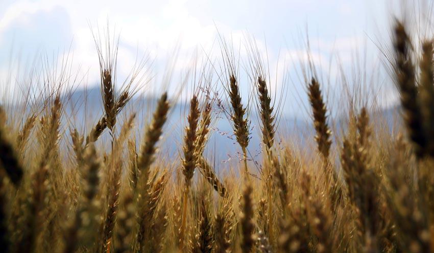 Biodiversidad y estrategias de la granja a la mesa: impulso positivo para el desarrollo del biogás