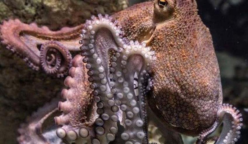 Utilizan especies acuáticas como bioindicadores