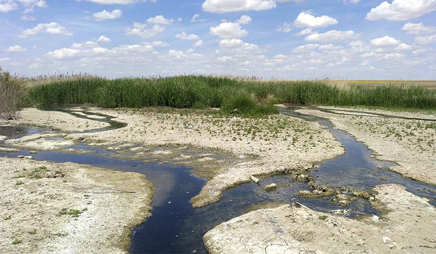 Microplásticos en la Reserva de la Biosfera de La Mancha Húmeda