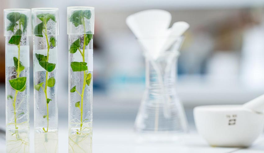 La bioeconomía circular, clave contra el cambio climático, una oportunidad empresarial de 7,7 billones de dólares