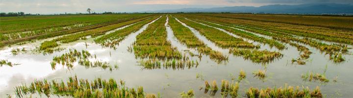 El IRTA coordina un proyecto sobre las medidas para evitar la desaparición del Delta del Ebro por el cambio climático