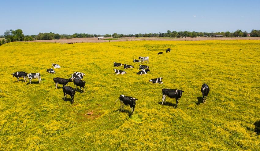 Un 35% de la emisiones de gases de efecto invernadero se generan en la producción de alimentos