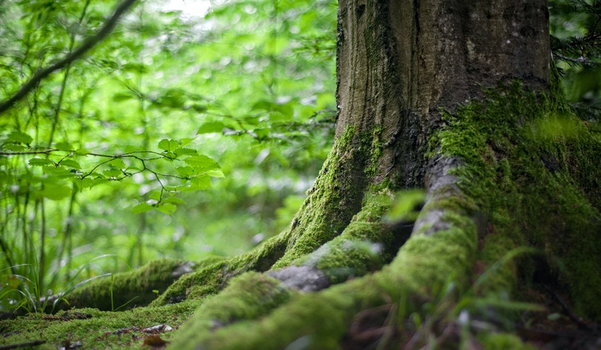 Propuesta de la UE del VIII Programa de Acción de Medio Ambiente -  Actualidad RETEMA