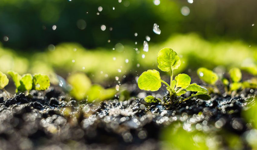 El consumo de agua para riego se redujo un 15% por hectárea en los últimos diez años