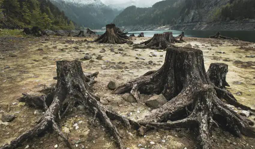 Las consecuencias de la crisis de biodiversidad para los ecosistemas y los humanos