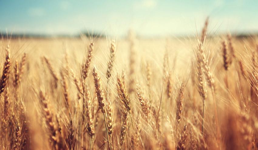 El IRTA y el Servicio Meteorológico de Cataluña estudiarán la influencia del clima en el sector agroalimentario
