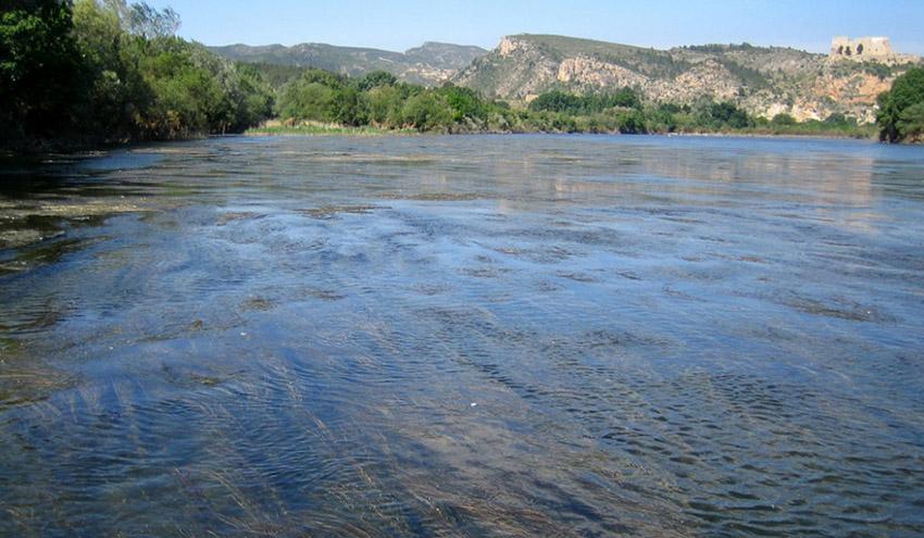La depuración de las aguas residuales urbanas provoca cambios en la flora y fauna de los ríos