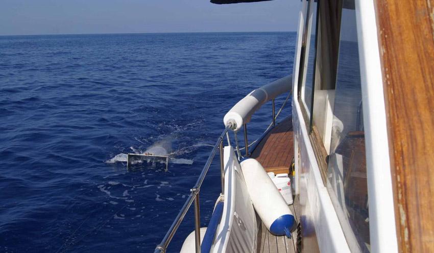 Los residuos plásticos ya son parte del ecosistema marino del Mediterráneo