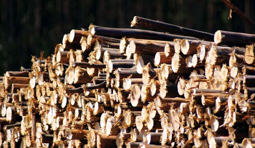 Declaradas de interés autonómico las plantas de biomasa Zuera y Erla
