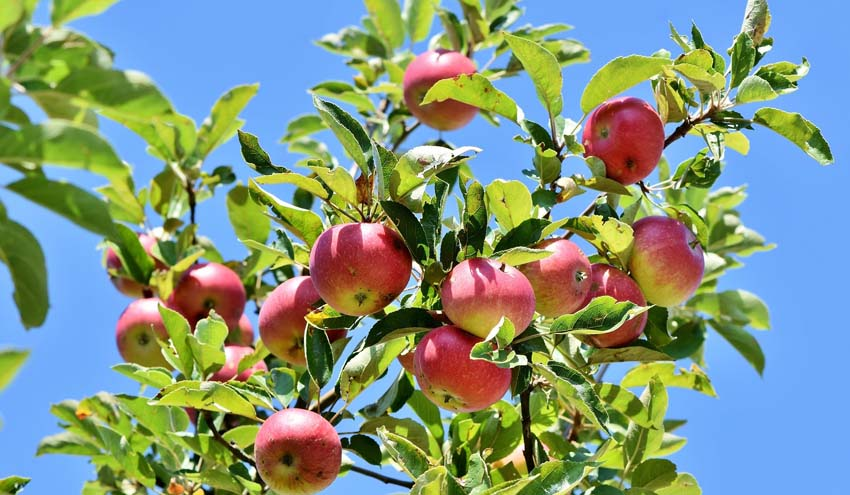 Compostaje y energía a partir de una gestión eficiente de los purines y renovación de plantaciones frutales