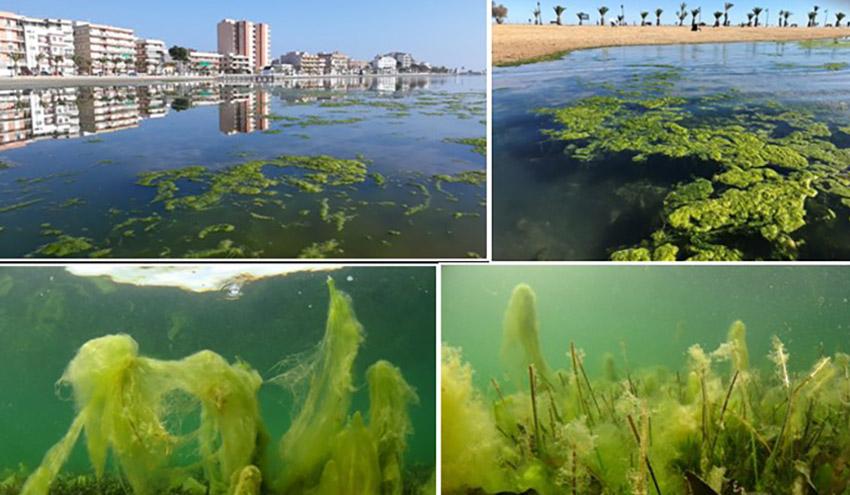 La recuperación del Mar Menor pasa por frenar la entrada de sedimentos y nutrientes
