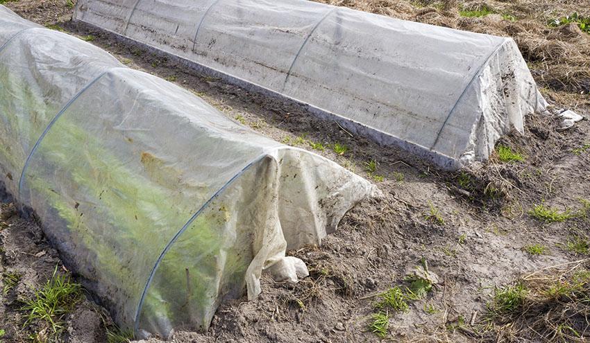 El proyecto AP-Waste estudiará la biodegradación de plásticos agrícolas a través de insectos y microorganismos