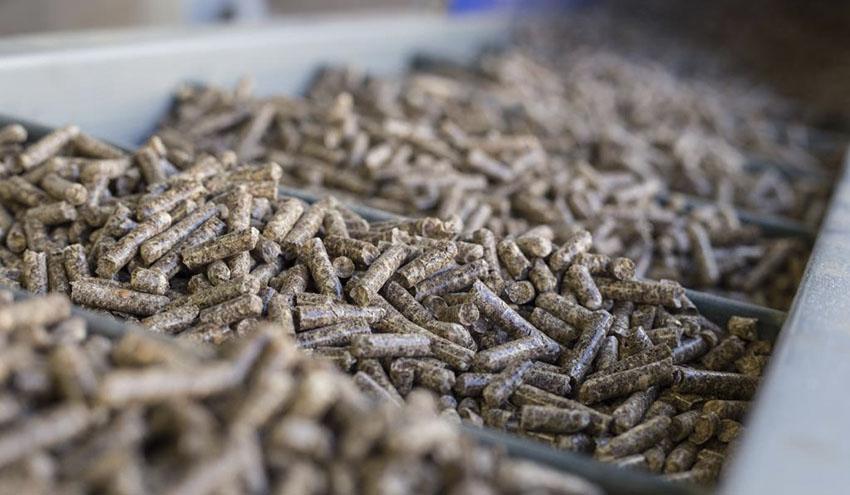 La producción de pellet de madera en España aumentó un 20% en 2019