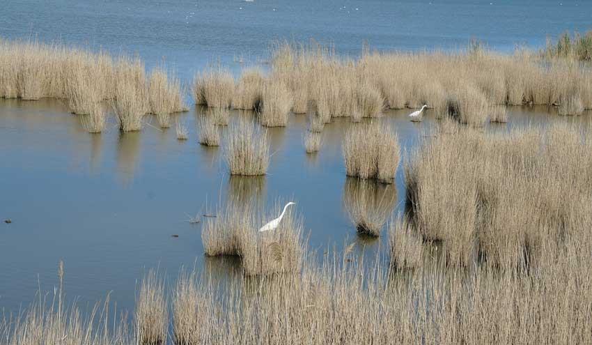 Aprendamos de los desastres ambientales del delta del Ebro y el Mar Menor