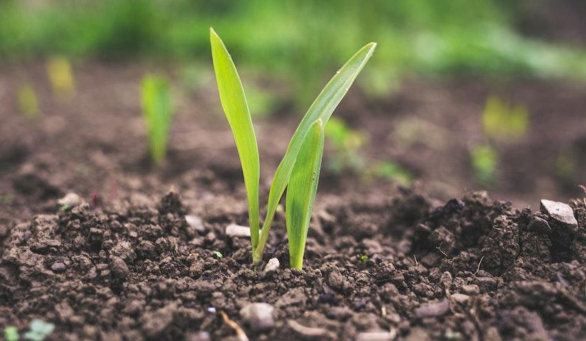 Grupo SUEZ se une a la iniciativa 'Circulares y Sostenibles 2025' impulsada por Cooperativas Agro-alimentarias