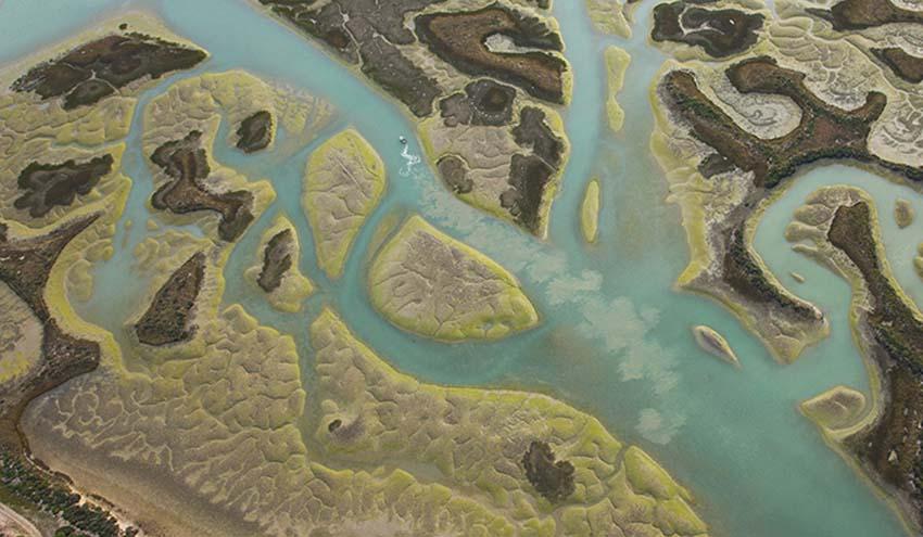 Analizan durante tres décadas el proceso de formación de las marismas costeras
