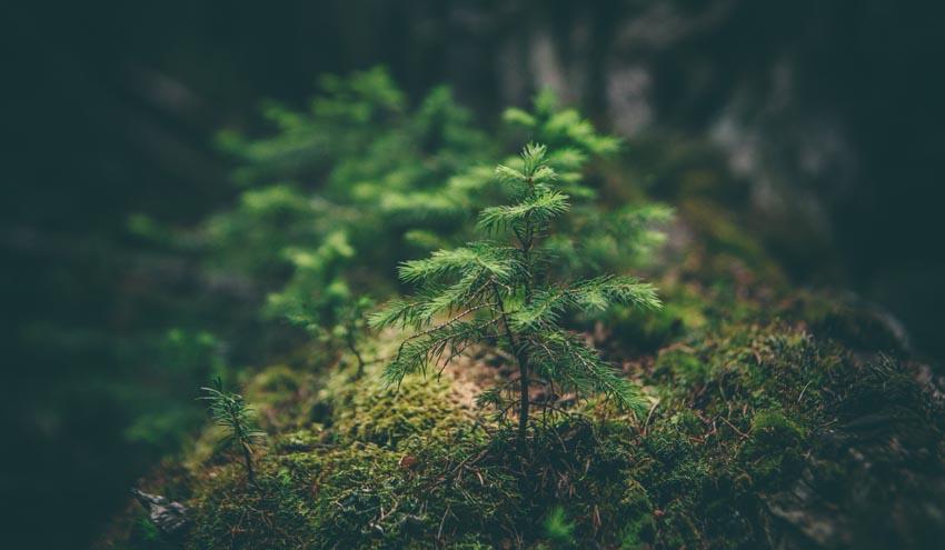 IIDMA y la SSEE de la Universidad de Oxford hacen sugerencias para la recuperación verde post-Covid en España