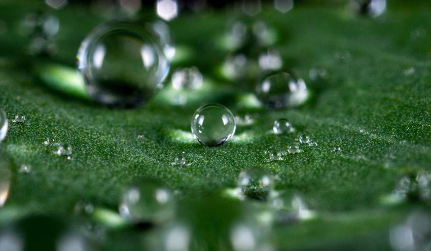 El IIAMA realiza un estudio que analiza la presencia de Helicobacter en aguas reutilizadas para riego agrícola
