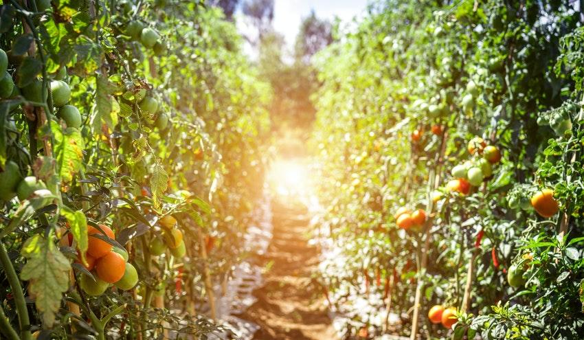 Nuevas soluciones para una gestión integrada de los recursos hídricos en la agricultura