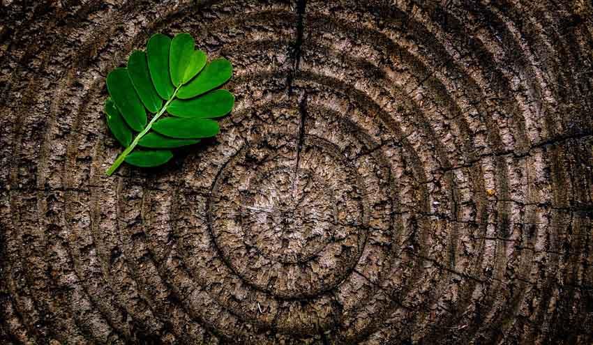 La integración de la economía circular y la bioeconomía mejoraría la sostenibilidad en Europa