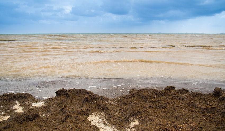 El Mar Menor lleva décadas enfermo