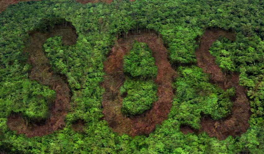 Un estudio sugiere que solo el 3 % de los ecosistemas terrestres del planeta permanecen intactos