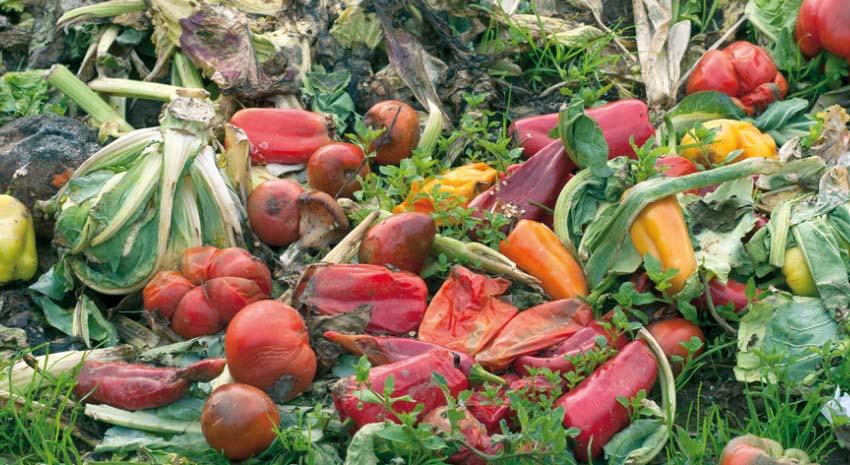 Cerca de 300 profesionales conocerán en Madrid las mejores iniciativas contra el desperdicio alimentario