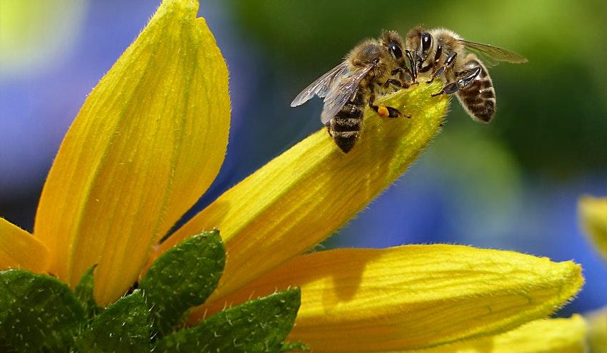 Las abejas indican la presencia de microplásticos en el medio ambiente