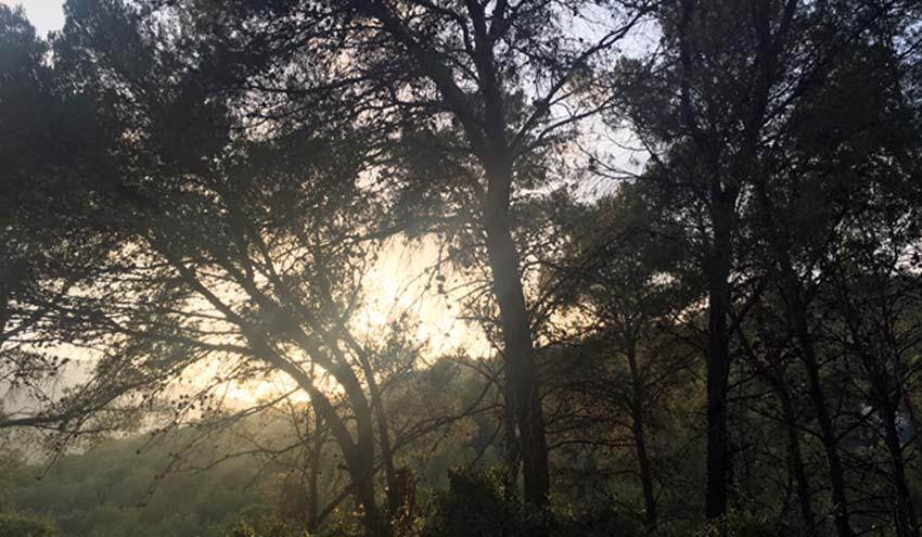 La gestión forestal ecohidrológica mejora la adaptación de los bosques mediterráneos al cambio climático