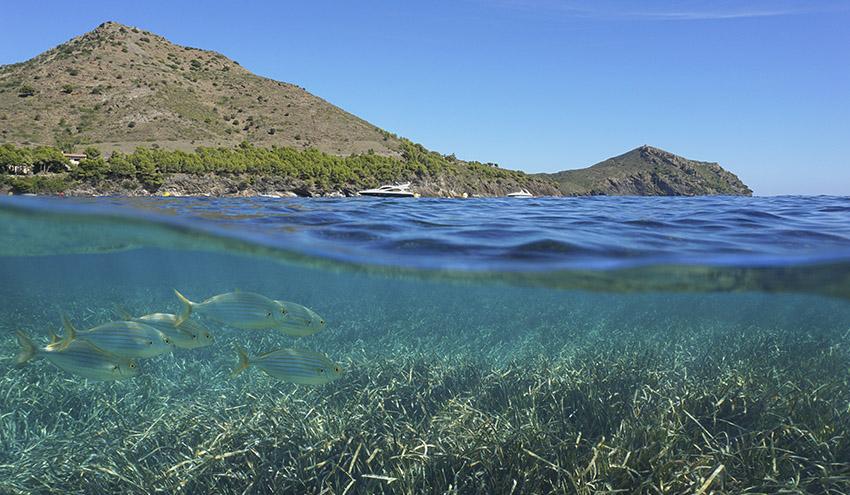 Los riesgos de la energía eólica para los ecosistemas marinos