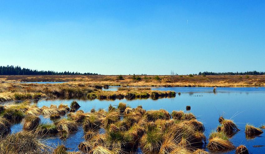 España se marca como objetivo la recuperación de 20.000 hectáreas de humedales en 2030