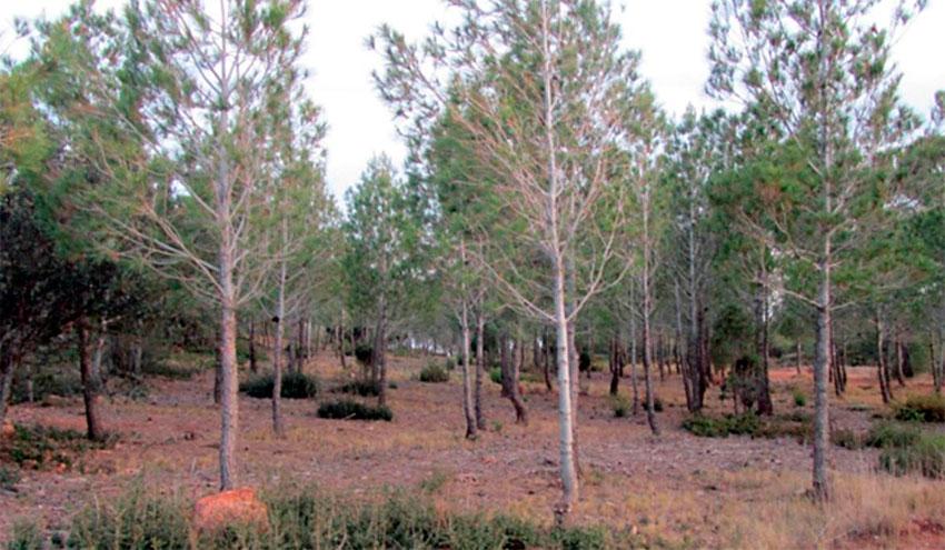 La gestión forestal ecohidrológica mejora el estado de conservación del suelo en los bosques semiáridos