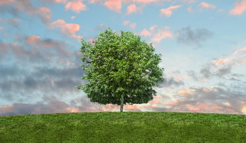"""Aprobada la """"Ley Europea del Clima"""" con el fin de lograr la neutralidad climática en 2050"""