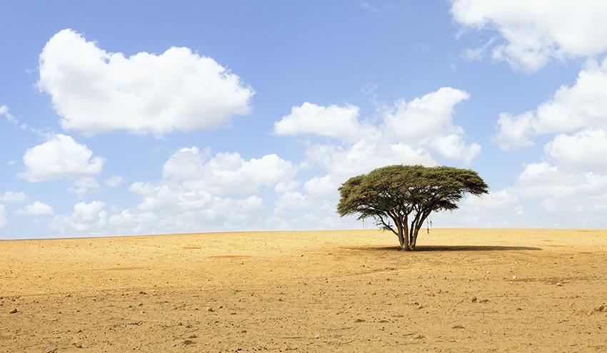 Árboles transgénicos para frenar el desierto y restaurar el planeta