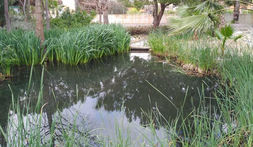 Global Omnium analiza el uso de humedales artificiales para el tratamiento de aguas residuales