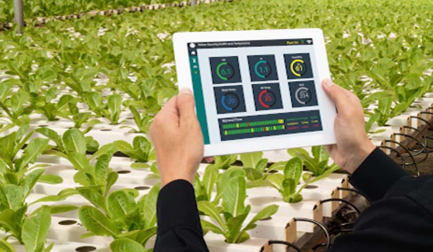 En marcha el proyecto NEX-LABS, para un sector agroalimentario más sostenible y resiliente en el mediterráneo