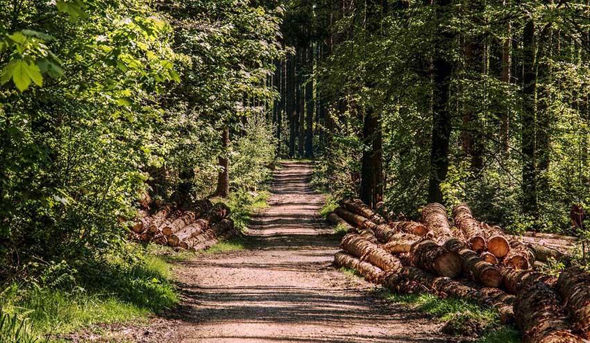 Veolia Biomasa colabora en la prevención de incendios forestales en Castilla-La Mancha