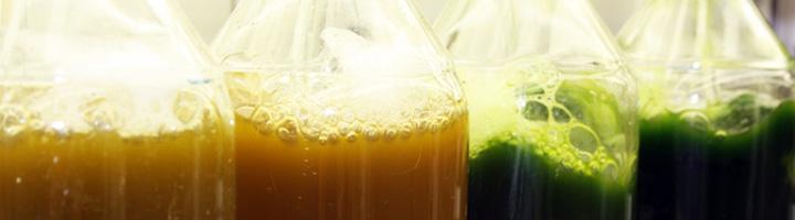 Desarrollan un nuevo método para deshidratar microalgas y reducir el consumo energético de la producción de biodiésel
