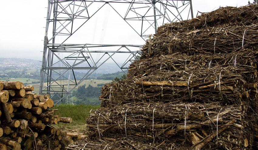 Europa defiende el uso de la biomasa como fuente de energía renovable ante los lobbies