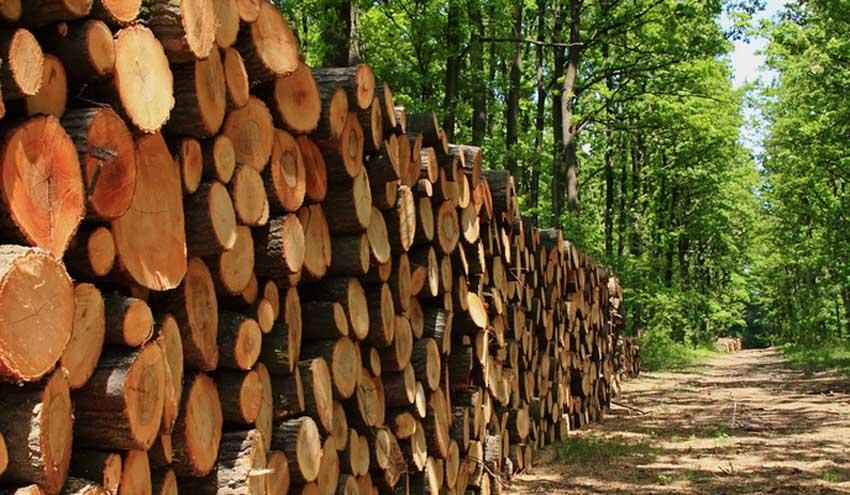 Un método sostenible para producir aminas a partir de residuos agrícolas y forestales