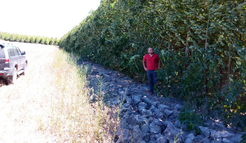 Forestalia destina 3 millones de euros en su plantación de cultivos energéticos en Cerdeña