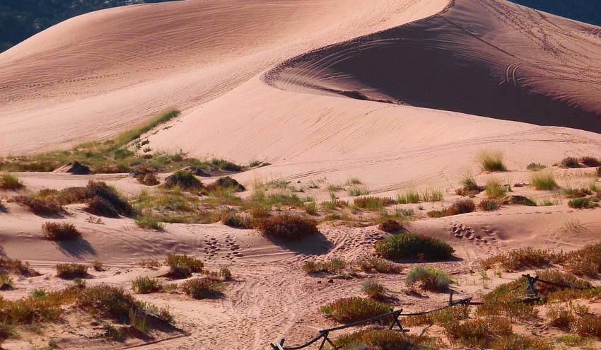La adaptación térmica de los microorganismos regula la emisión de CO2 de los suelos de zonas áridas