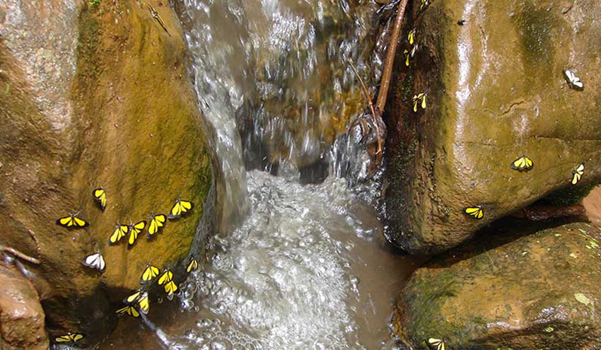 Proyecto ROBIN: cuantificando el papel de la biodiversidad en la mitigación del cambio climático