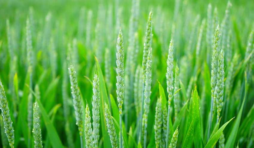 La gestión de riesgos como elemento clave para la sostenibilidad y resiliencia de la agricultura europea